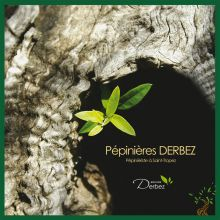 Derbez garden nurseries